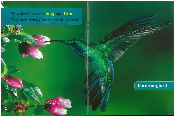win-ea-c-bird-beaks