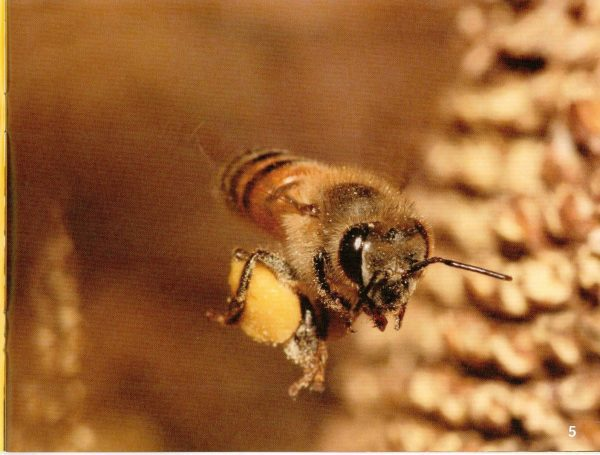 here-come-the-bees